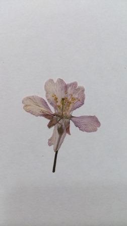 siori-1.jpg