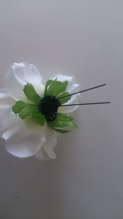anemone-8.jpg